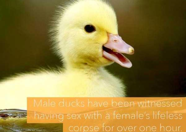 24 Horrific Animal Facts That Will Ruin Your Good Mood (24 photos) 25