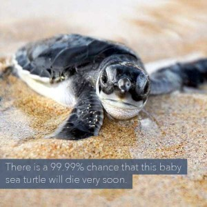 24 Horrific Animal Facts That Will Ruin Your Good Mood (24 photos) 4