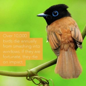 24 Horrific Animal Facts That Will Ruin Your Good Mood (24 photos) 5