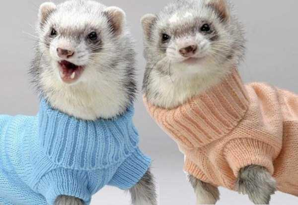 animals-in-sweaters (14)