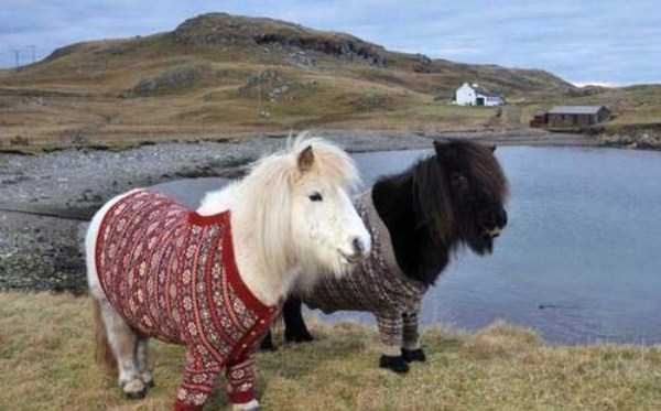 animals-in-sweaters (2)