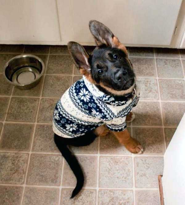 animals-in-sweaters (20)