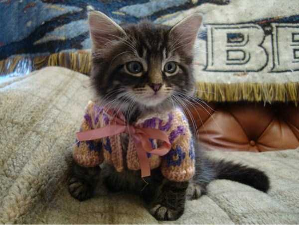 animals-in-sweaters (22)
