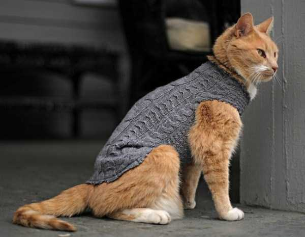animals-in-sweaters (24)