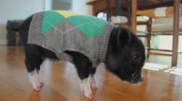 animals-in-sweaters (26)