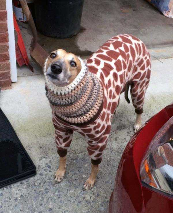 animals-in-sweaters (28)