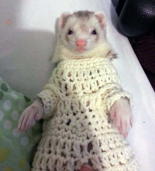 animals-in-sweaters (3)