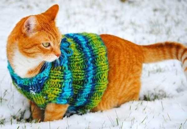 animals-in-sweaters (31)