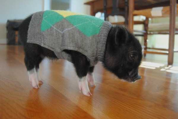 animals-in-sweaters (33)