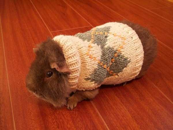 animals-in-sweaters (34)