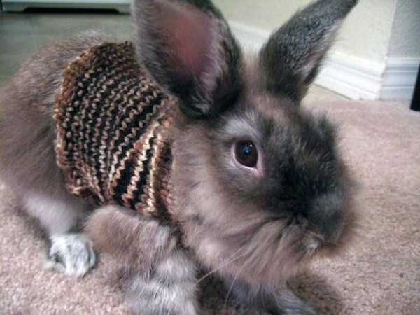 animals-in-sweaters (5)