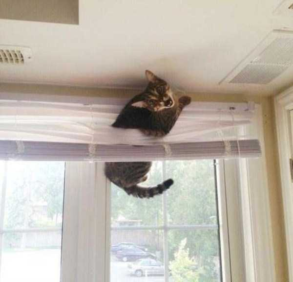 cats-stuck-in-things (21)
