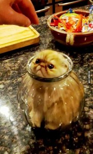 Curious Cats Stuck in Things (44 photos) 24