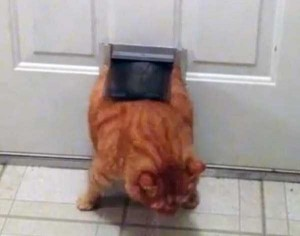 Curious Cats Stuck in Things (44 photos) 32