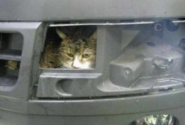 cats-stuck-in-things (42)