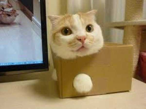 cats-stuck-in-things (7)