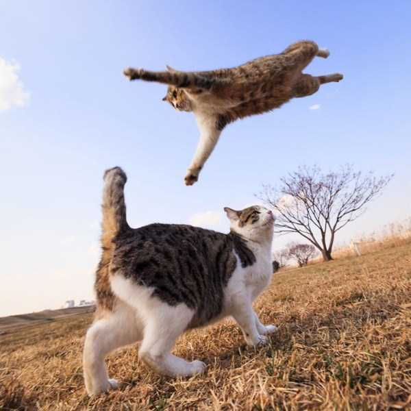 flying-cats (15)