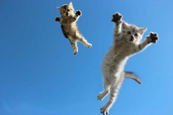 flying-cats (21)