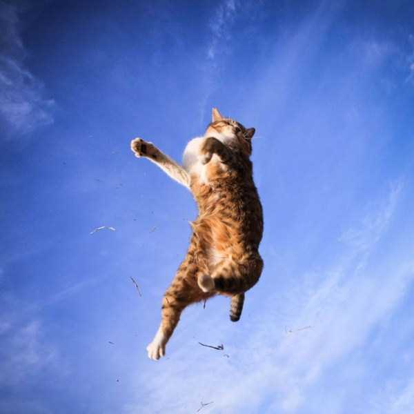 flying-cats (27)