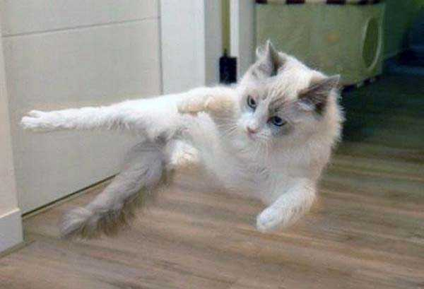 Flying Ninja Cats (32 photos) 31