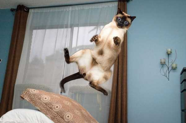flying-cats (6)