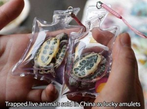 Ridiculous Things That Are Normal In China (50 photos) 15