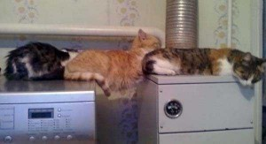 Ultimate Planking Masters (25 photos) 15