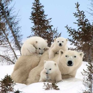These Animal Family Portraits Will Melt Your Heart For Sure (30 photos) 11