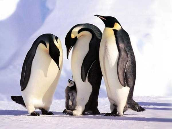 animal-family-pictures (14)