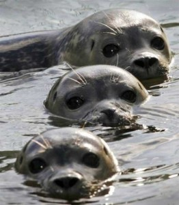 These Animal Family Portraits Will Melt Your Heart For Sure (30 photos) 16