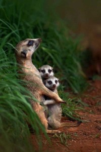 These Animal Family Portraits Will Melt Your Heart For Sure (30 photos) 17