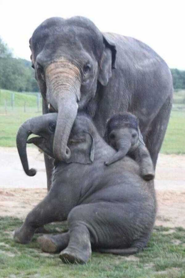 animal-family-pictures (18)