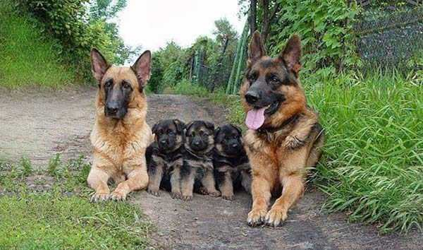 animal-family-pictures (19)