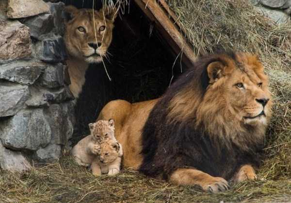 animal-family-pictures (2)