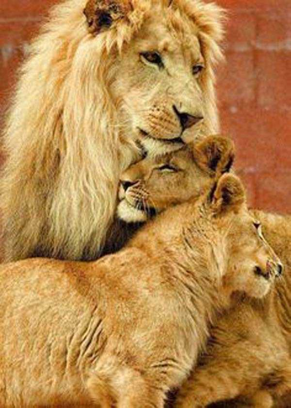 animal-family-pictures (22)