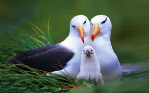 These Animal Family Portraits Will Melt Your Heart For Sure (30 photos) 23