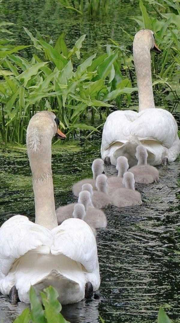 animal-family-pictures (3)