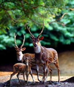 These Animal Family Portraits Will Melt Your Heart For Sure (30 photos) 4
