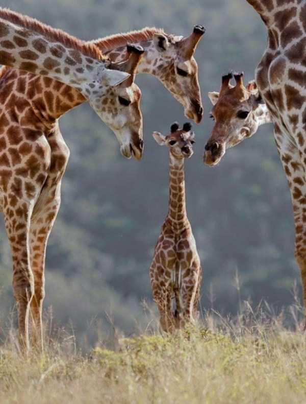 animal-family-pictures (8)