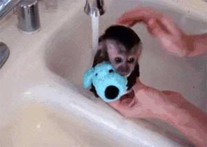 Adorable Photos of Animals Taking a Bath (68 photos) 10