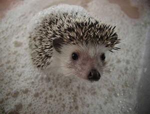 Adorable Photos of Animals Taking a Bath (68 photos) 12