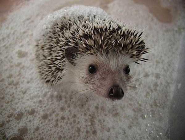 animals-taking-bath (12)