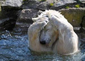 Adorable Photos of Animals Taking a Bath (68 photos) 13
