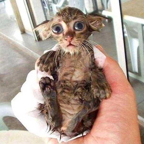 animals-taking-bath (17)