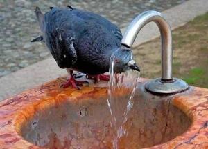 Adorable Photos of Animals Taking a Bath (68 photos) 18
