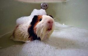 Adorable Photos of Animals Taking a Bath (68 photos) 21