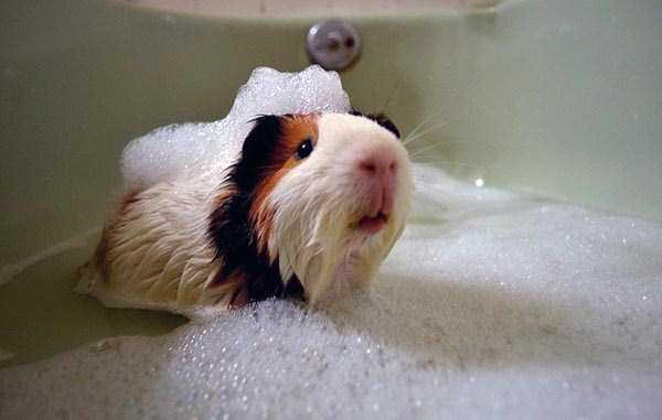animals-taking-bath (21)