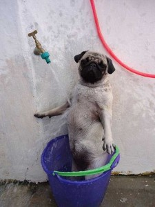 Adorable Photos of Animals Taking a Bath (68 photos) 22