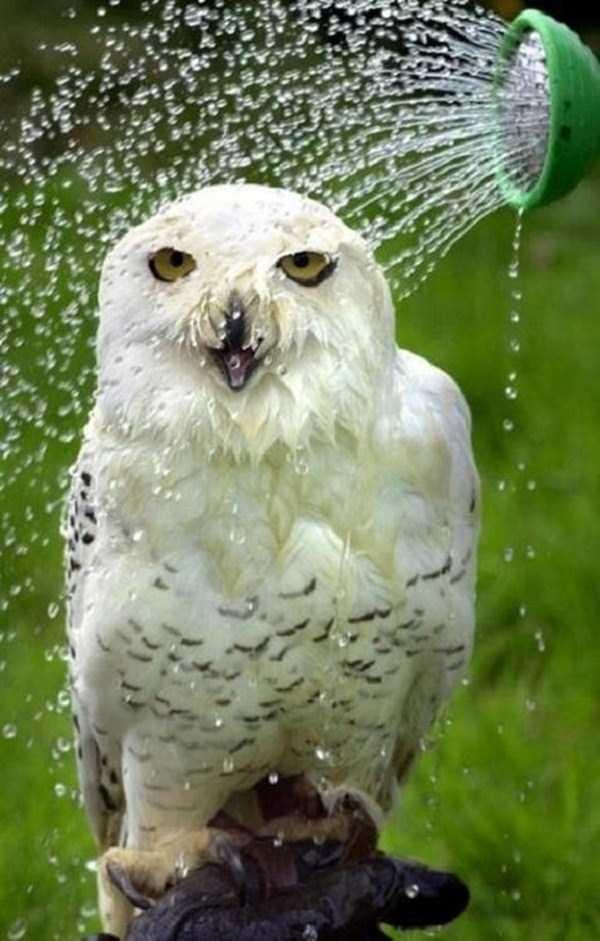animals-taking-bath (24)