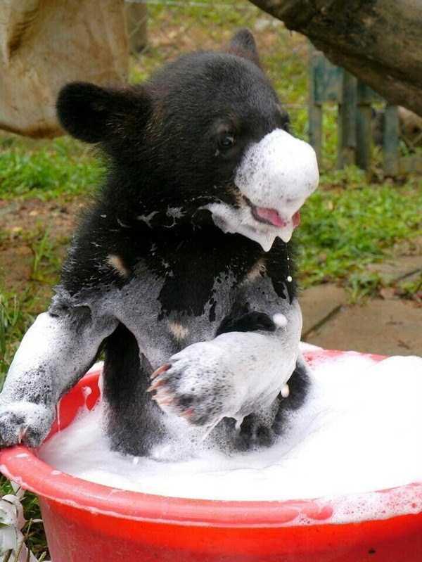 animals-taking-bath (25)